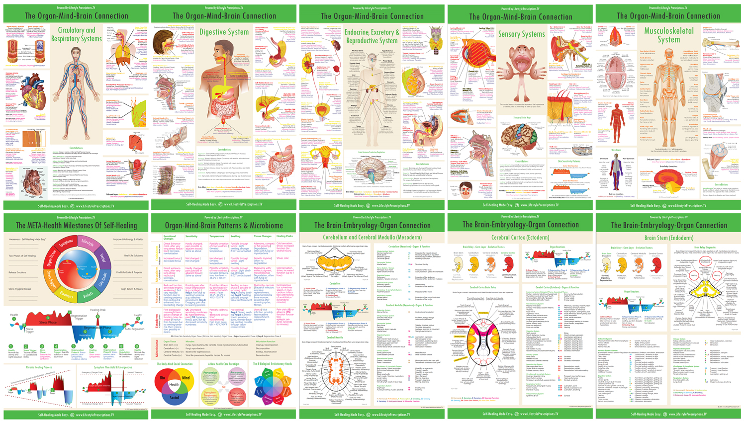 Lifestyle Prescriptions Organ-Mind-Brain Connection Reference Charts